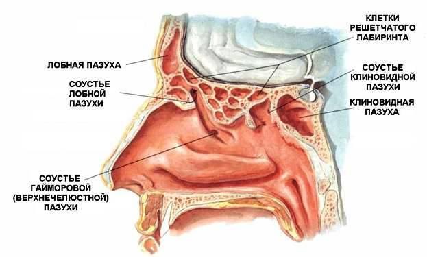 Профилактика заложенности носа