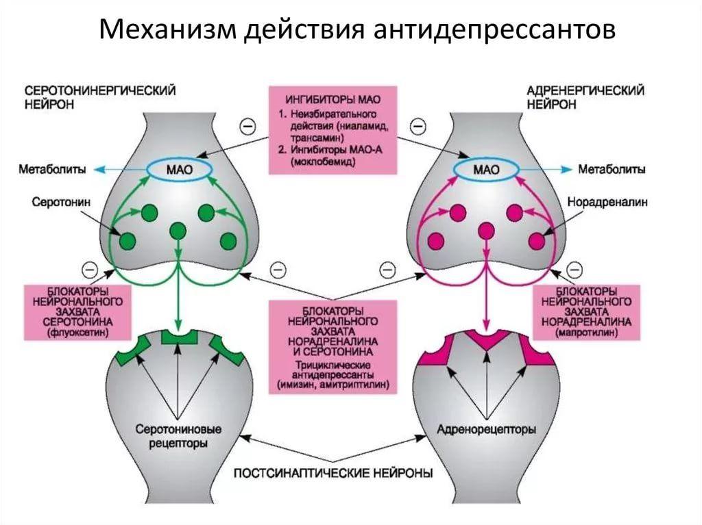 mehanizm-dieistviya-antidepressantov